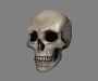 general:items:skull_head.png